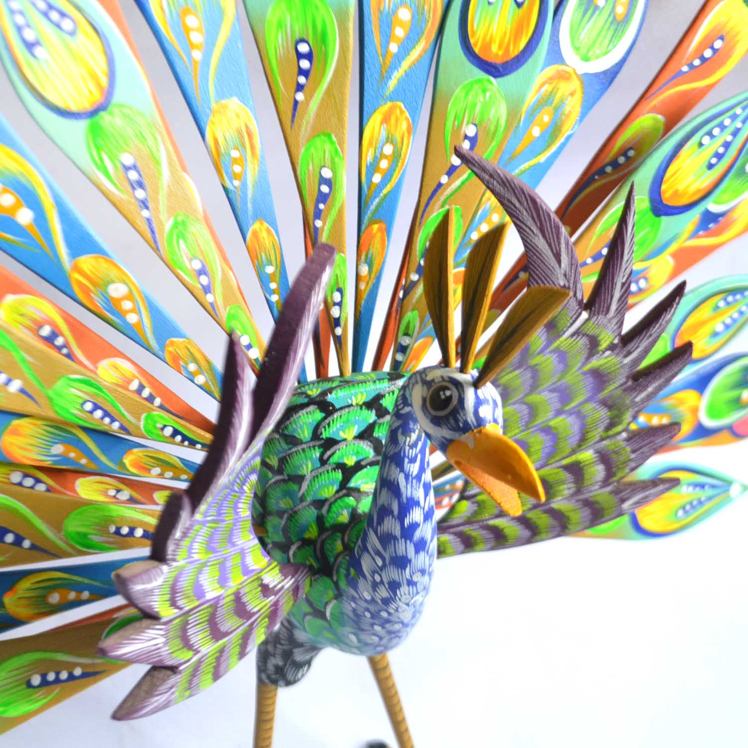 Pavo real - Turkey